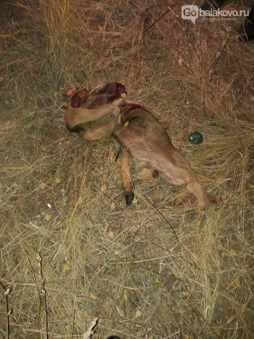 Очевидцы: на окраине Балаково оставили свой «след» сатанисты, фото-1