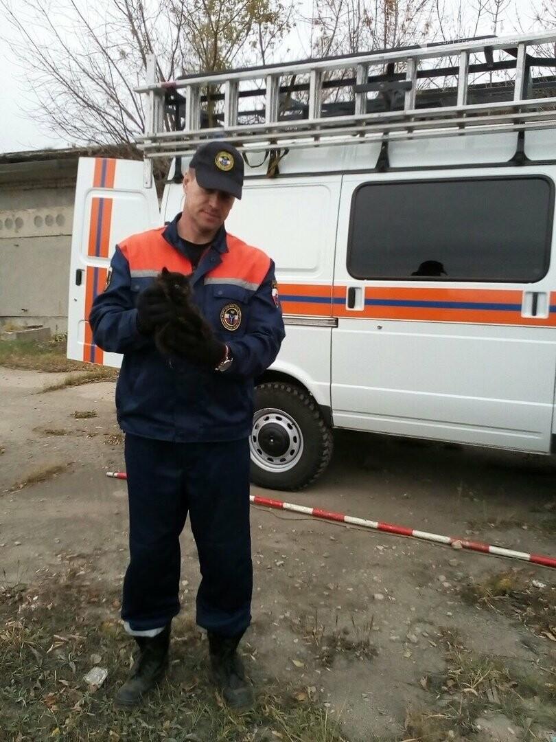 В Балаково спасатели достали котенка из трубы, фото-1