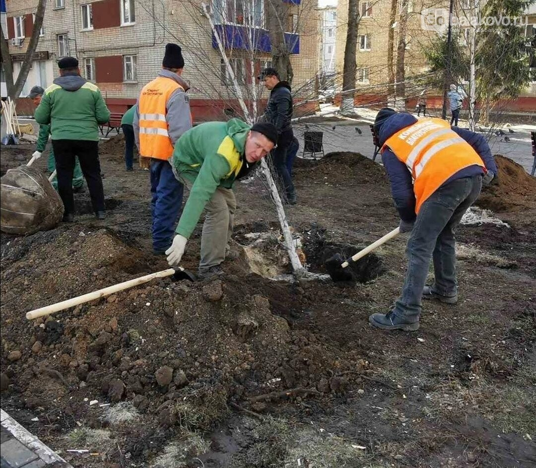 В Балаково началось озеленение территории у Обелиска. Фото, фото-5