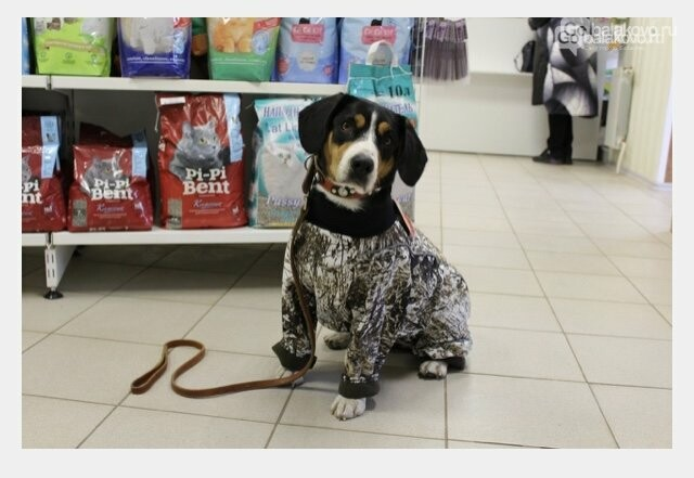 Пафос или необходимость? «Собачья» мода  по-Балаковски, фото-1