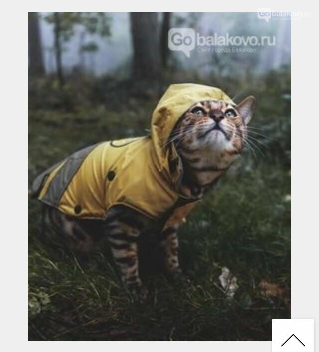 Пафос или необходимость? «Собачья» мода  по-Балаковски, фото-2