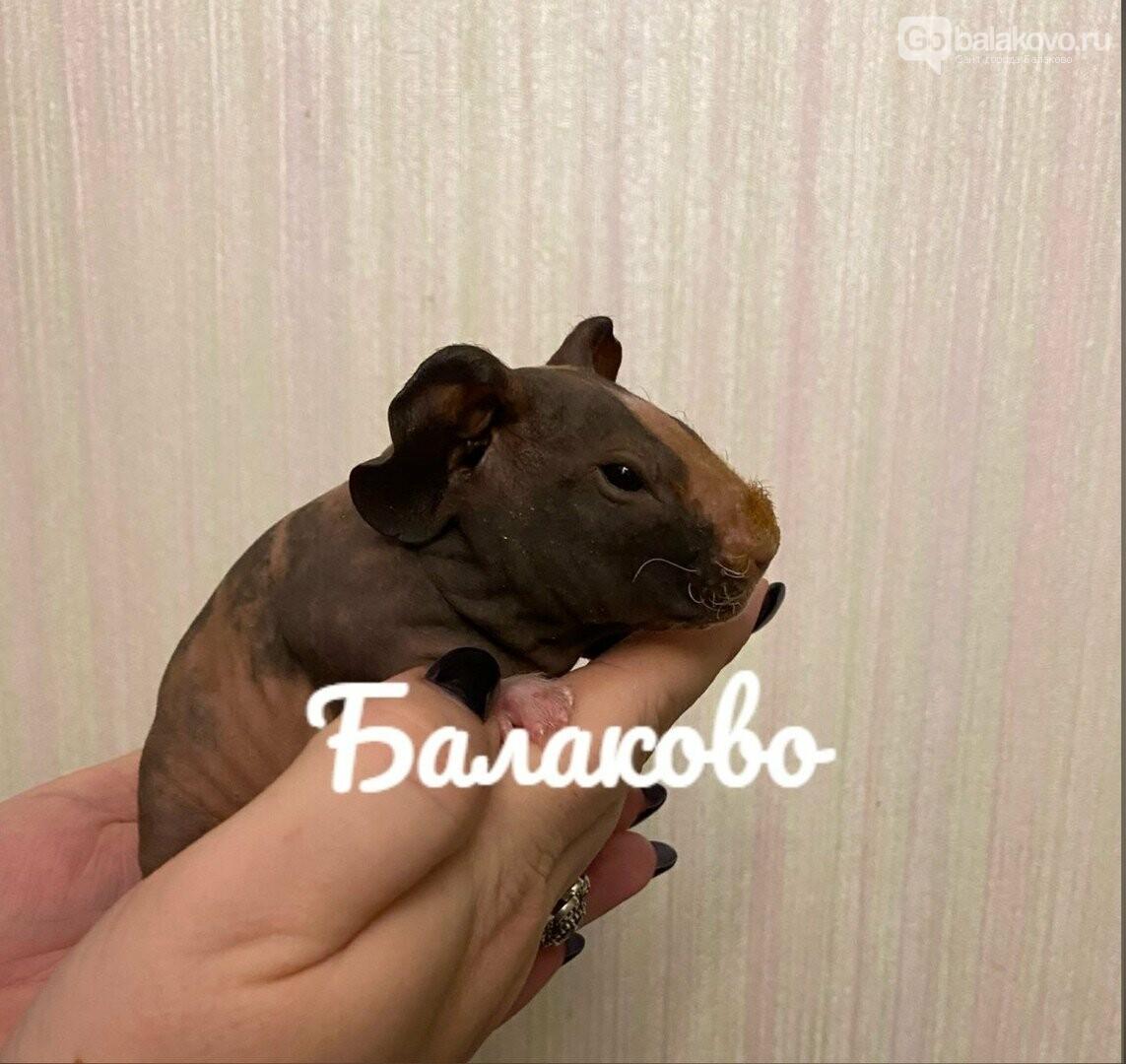 Домашний грызун - идеальный выбор, считает Ле'Муррр, фото-2