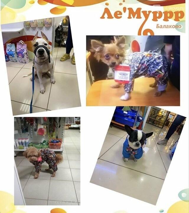 В мире животных новостей с магазином «Лемур», фото-2