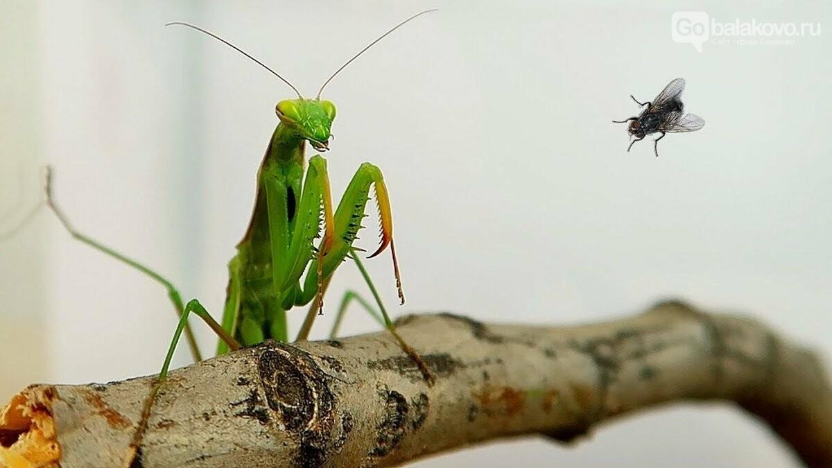 Домашняя экзотика: улитки, муравьи и другие питомцы... Легко ли ухаживать?, фото-1