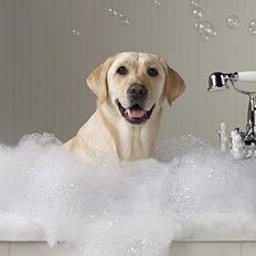 гигиена для собак