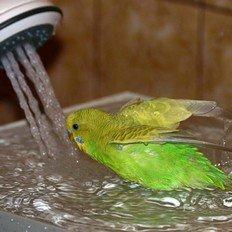 гигиена для птиц