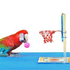 игры для птиц
