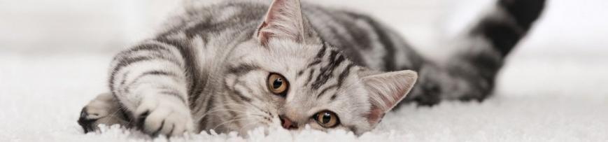 товары для кошек в Балаково