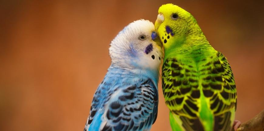 товары для птиц в Балаково