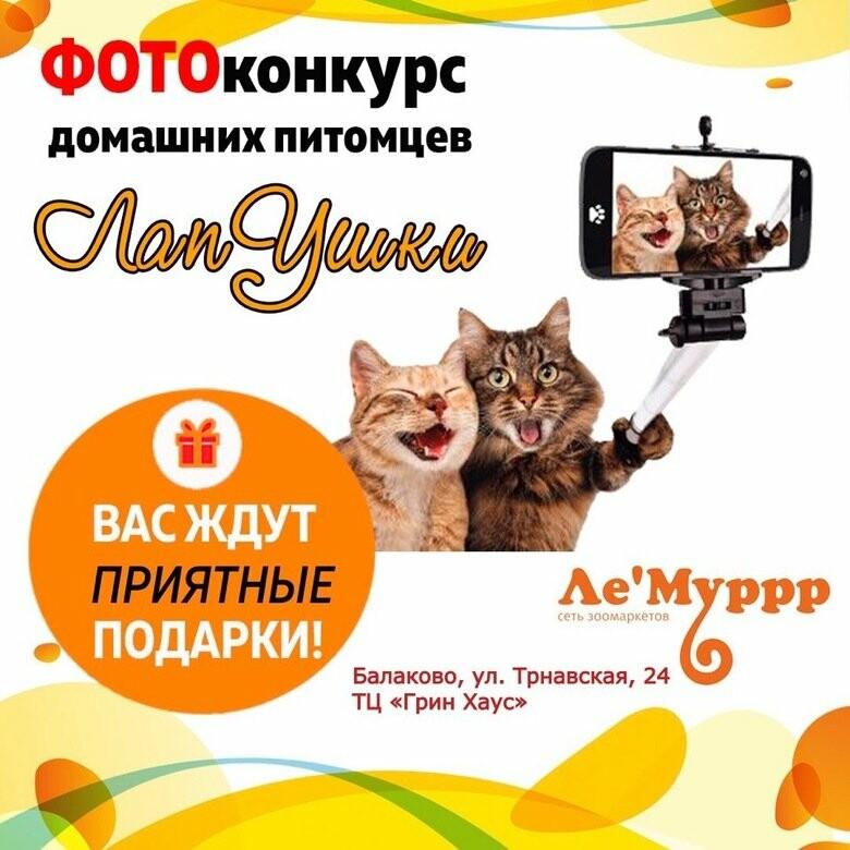 похищен власть конкурс фотографий домашних животных регулярной основе